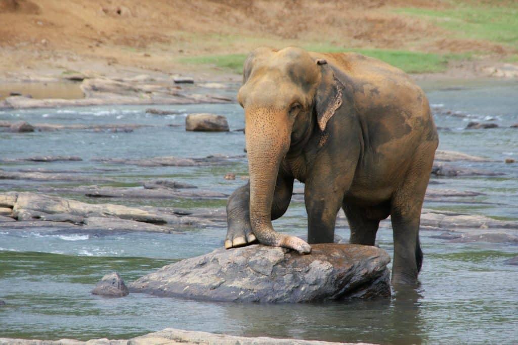 sri lanka elephant river