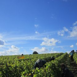 Vouvray-Vineyard-Tour