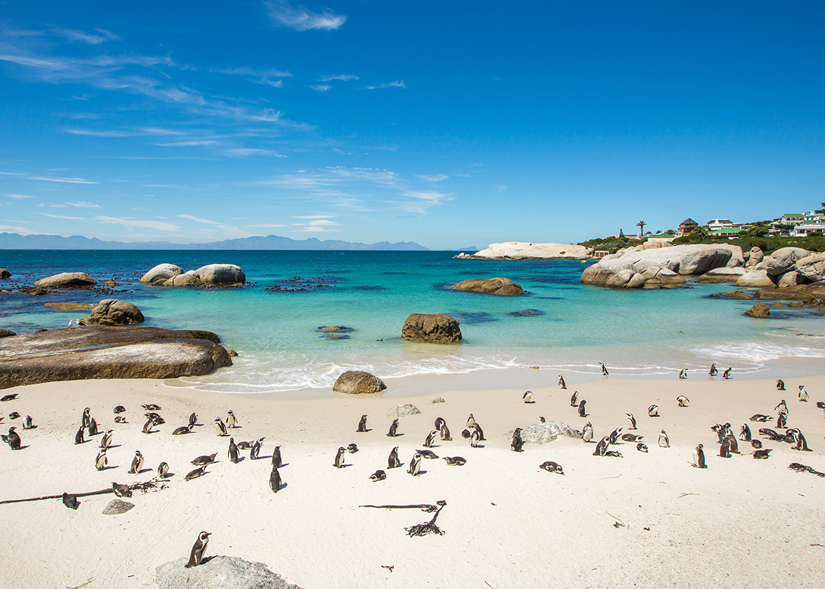 Penguin Boulder Beach South Africa