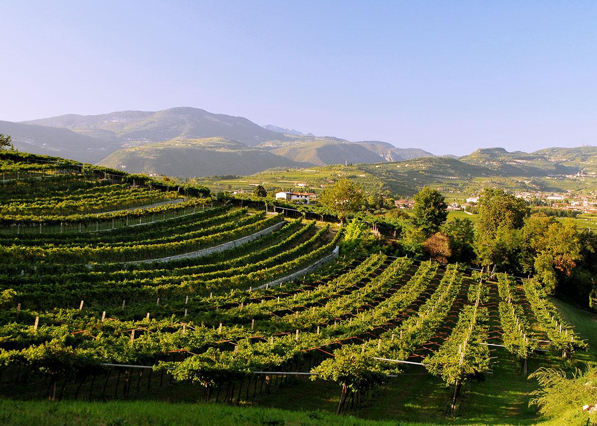 Veronese Vineyards
