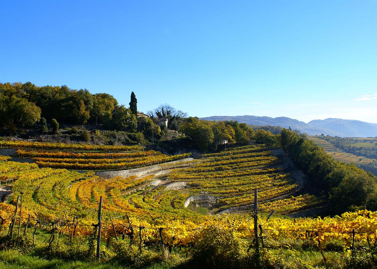 Wine Orchard Visit